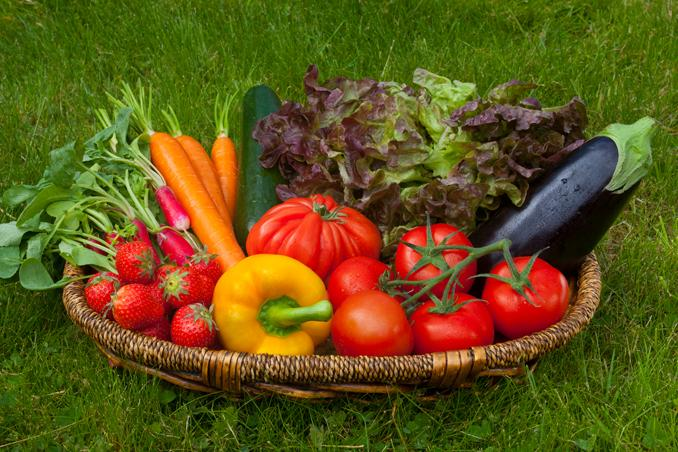 Légumes bio Crach Morbihan